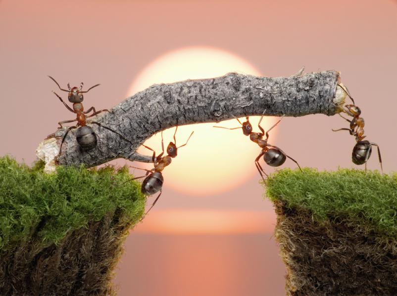 ants-bridge